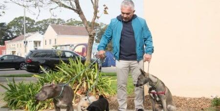 Cesar Millan: Zaklinacz psów