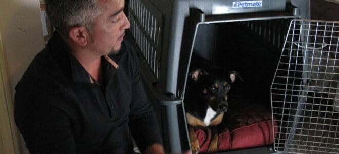 Cesar Millan: Zaklinacz psów s6 odc. 08