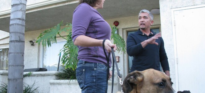 Cesar Millan: Zaklinacz psów s6 odc. 09