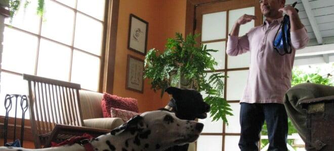 Cesar Millan: Zaklinacz psów s6 odc. 14