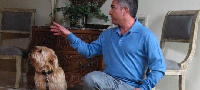 Cesar Millan: Zaklinacz psów s5 odc. 16