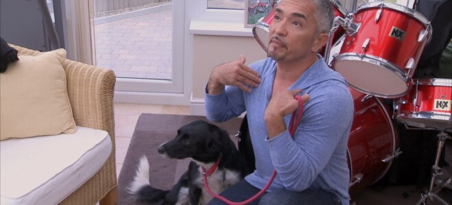 Cesar Millan: Zaklinacz psów s7 odc. 10